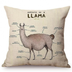 RubeyLiza - Animals - Alpaca - Anatomy of the Llama