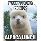 Alpaca - Lunch Boxes