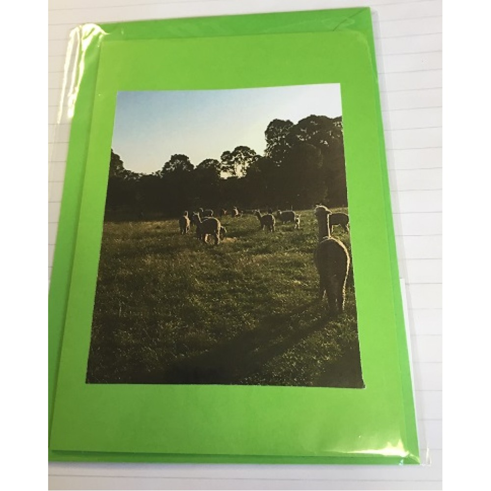Alpaca Greeting Cards - End of the Day