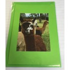 Alpaca Greeting Cards - Yabby