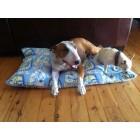 Pet Bed - Large
